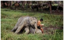 elephant and reader